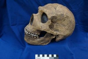 33.1 H. neanderthalensis Amud 1 0.4-0.04 mya